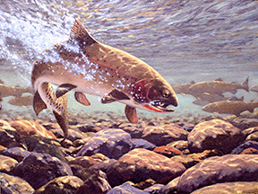 cuttroat trout painting